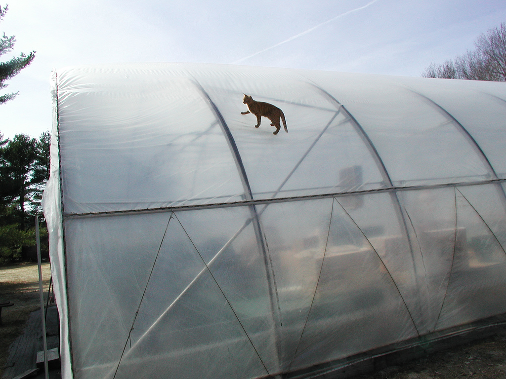 Air-Inflated, Double-Layer Polyethylene Greenhouse