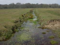 Vegetated Waterways